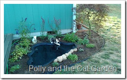 Polly plays in the new cat garden.